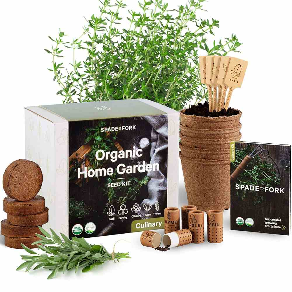 Herb Garden Starter Kit that Ensures You Have Healthy Herbs