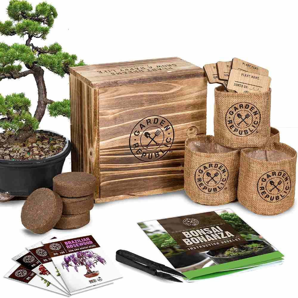 GARDEN REPUBLIC Bonsai Tree Starter Kit
